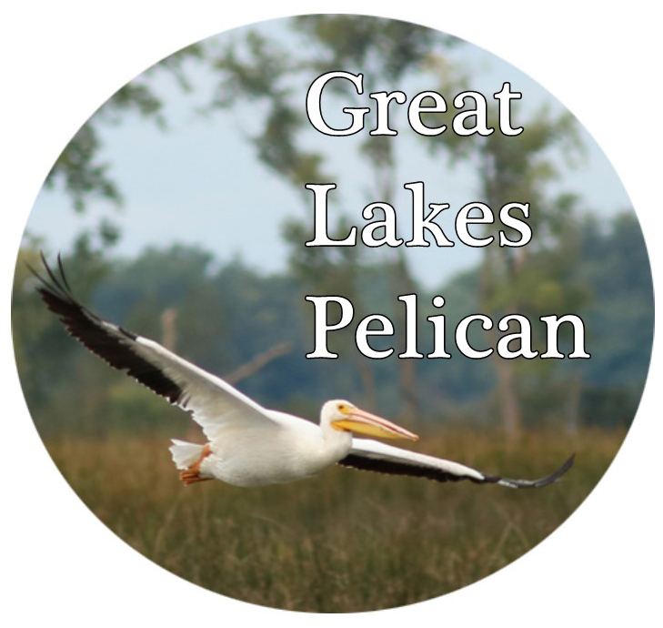Great Lakes Pelican